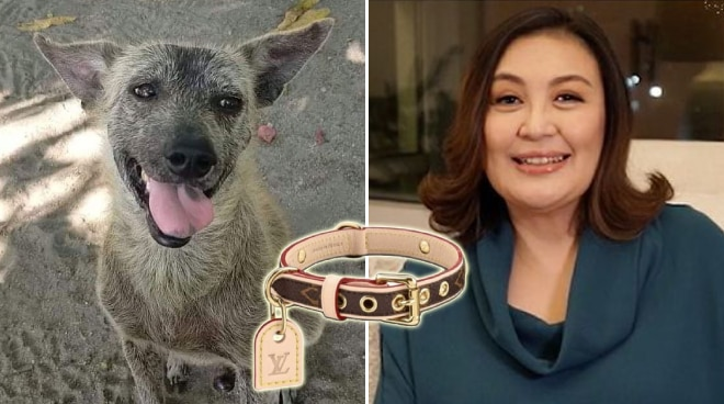 Sharon Cuneta buys Louis Vuitton collar for stray dog she adopted from Olongapo
