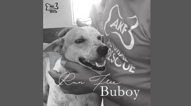Netizens mourn death of Buboy, the Pinoy Hachiko